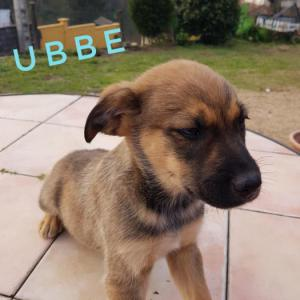 Ubbe