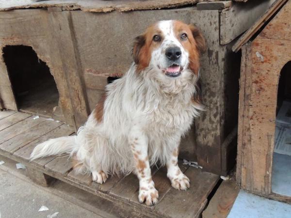 Seto perro adoptado bamb difunde - Seto de bambu ...